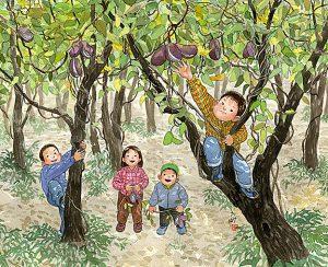あけびのみを見つけて木登りして採りました。白くて甘い果肉に黒い種がびっしり。