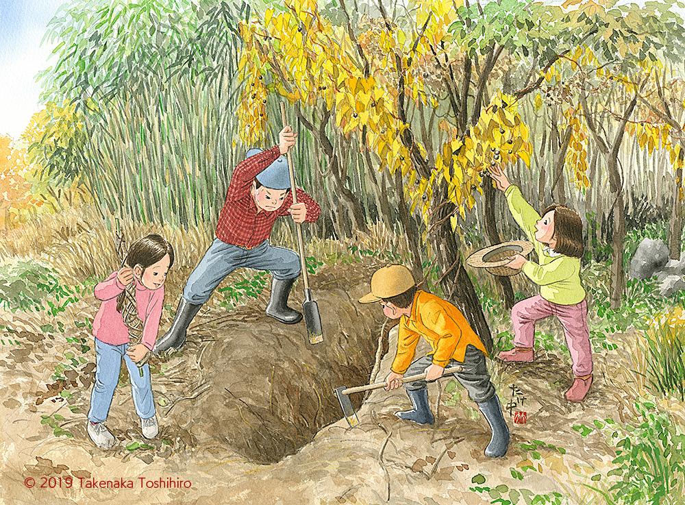 秋の山里で自然薯の葉を見つけ山芋掘りをしたらムカゴもたくさん見つかって大収穫。