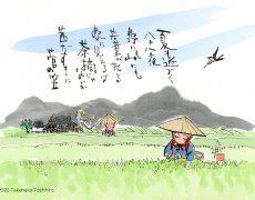 夏も近づく八十八夜で知られる茶摘みの歌が夏の訪れを感じさせます