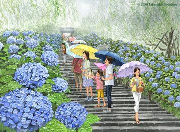あじさい寺で有名な鎌倉の明月院は雨がそぼ降る中でも艶やかな紫陽花が雨の滴を受けてキラキラ輝いてます
