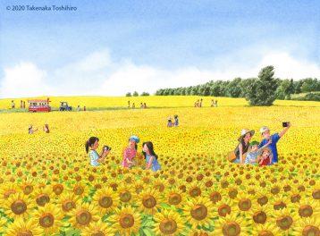 北海道の広い大地にひろがるひまわりは一面黄色に染め上げて空の青さとのコントラストが美しい